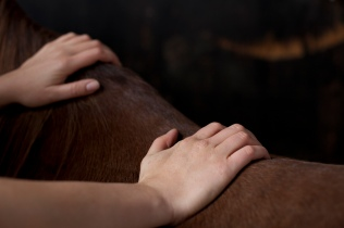 klassische Massage am Pferd