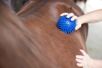 Igelballmassage Pferd