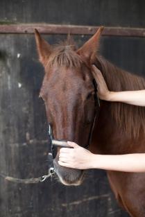 Manuelle Therapie am Pferd