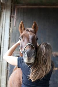 Untersuchung des Altas beim Pferd